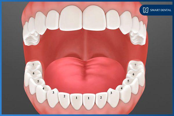 Trồng răng số 5 1